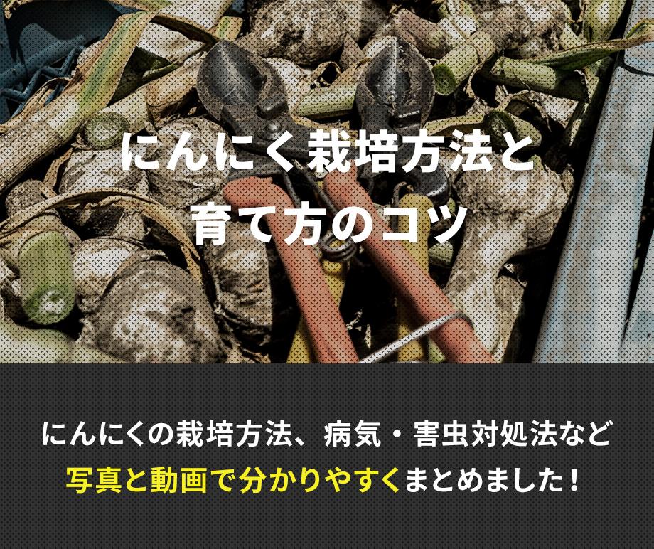 青森県のにんにく専門農家 農業生産法人株式会社よしだや流 にんにく栽培方法・育て方